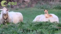让你放羊你这是啥意思,可移动生物热毯!