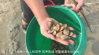 兴哥去赶海抓螃蟹,这几个青蟹太猛了,还偶遇大美女挖螺