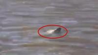 一条鱼儿正向岸边游来,渔民们看清后,同伴扔掉手机就跑!