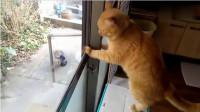 你看那两只猫,是不是像极了爱情!