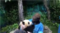 精灵王抱住熊猫不肯撒手,熊猫懵了:这老外谁呀!盘他!