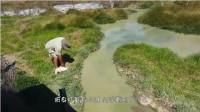 老外轻拍水面,下一秒令人窒息的场面发生,镜头记录全过程