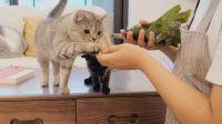 猫主子:肉粽太香了吧!6只猫1只狗,主人亲自试吃猫零食,喂猪现场~
