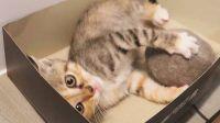 捡来的小奶猫喜欢大毛团,省着买玩具,又是无心工作的一天