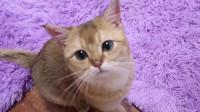 主人在线撸猫,这大肥橘猫享受的表情,太可爱了