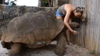 美女与乌龟!难得一见的千年王八万年龟,这老龟怕是成精了