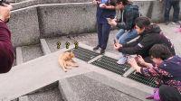 台湾猫村里的猫一个比一个会摆拍,尤其姓橘的