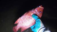 萌妹子深夜赶海,收获了4只大螃蟹和一条大红鱼,卖了200多块