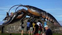 这只龙虾活了134年,受国家特赦免死,吃货只能看不能吃