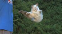猫咪为什么摔不死?不是因为有9条命,来看看放慢10倍下的镜头