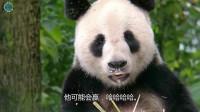 终于抓拍到了熊猫舌头是什么颜色