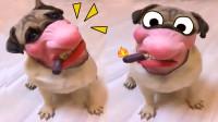 好魔性!狗子戴上恶搞面具太好玩了!