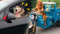動物界的那些厲害的司機們!