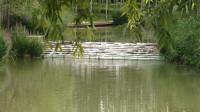 漫步平安县湿地公园(2)青海花儿-阿门了想坏了