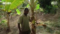 加纳:可可地图项目助流动农夫维持生计