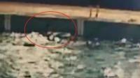 7岁男孩游泳馆溺亡 监控拍下他挣扎2分钟无人发现
