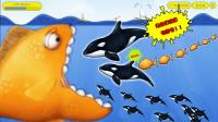 美味汪洋:变异金鱼被大白鲨家族4次追杀,它狂吃变大后逆袭复仇!