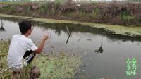不起眼的小水沟里,2个窝子轮流钓,鲫鱼不停口,为何这么多鱼?