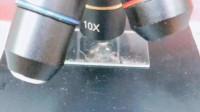 水蜜桃在显微镜下,放大200倍