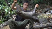 丛林生存,小伙挖陷阱狩猎到一头小野猪,这下终于可以饱餐一顿了