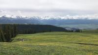 特克斯县喀拉峻大草原,远处雪山近处鲜花满地的美景