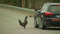 野鸡半路拦车要零食,不给就碰瓷,车主:以后得绕道走了