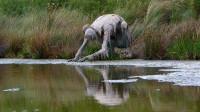 """女子在公园里散步,看到一只""""东西""""在喝水,这是什么怪物?"""