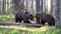 熊大和熊二打起来了,估计没人敢去拉架