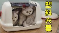 带猫咪去打疫苗,公猫躲在母猫身后,顿时怂成玩偶