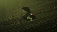 《昆虫总动员2-来自远方的后援军》终极预告片