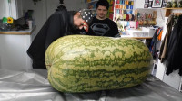 男子重金买下260斤的大西瓜,切开的一刹那,让人目瞪口呆