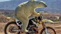 狗熊骑摩托车上高速!司机靠近狗熊失控了,镜头记录惊险瞬间