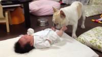 婴儿大哭不睡觉,爸妈都无可奈何狗狗赶紧来救场,画面简直暖哭了