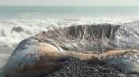 """印尼海边发现15米""""庞然大物"""",专家看后:赶紧跑!"""