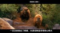 """小伙给熊找了一个""""女朋友"""", 保护了一片森林, 还拯救了一群动物"""
