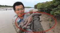 渔夫赶海运气爆发,6天没收的陷阱,进了只大章鱼