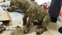 """女子捡到一只受伤小狗,浑身都是泥,清洗后才发现""""小狗""""真面目"""