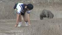 日本女子,作死勾引科莫多巨蜥追自己,镜头拍下全过程