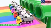 5种颜色的自动倾卸卡车载着奶牛去赶火车 家中的美国学校