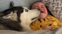 趁主人不注意,二哈偷溜进小宝宝的被窝,下一秒画面让人笑出声
