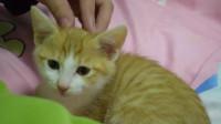 看着家里新来的小奶猫,大猫表示自己吃醋了