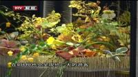 相约世园会:全球顶尖园艺师角逐世界花艺大赛 首都经济报道 20190821