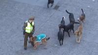 10只流浪狗包围住警犬,被训练的警犬就是不一样,丝毫也不虚!