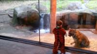 宝宝穿老虎装去动物园,小老虎以为遇同伴,下一秒的画面承包萌点