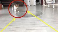 视觉效果会影响猫吗?小伙在地上画3D深坑,猫:感觉智商受侮辱