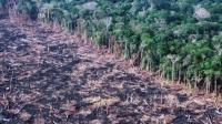 """""""地球之肺""""在燃烧 亚马逊雨林大火创纪录 说天下 20190823 高清版"""