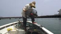 小池往海湾码头放下10个螃蟹笼,幸好抓到值钱货,不然亏惨了