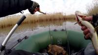 钓鱼 冒险野外捕捉野生梭子鱼