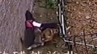 【现场直击】女孩放学途中被三只恶犬扑倒撕咬,幸遇路人及时出手相救!