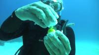 老外在海底敲开一个鸡蛋,下一秒颠覆认知,不敢相信自己的眼睛